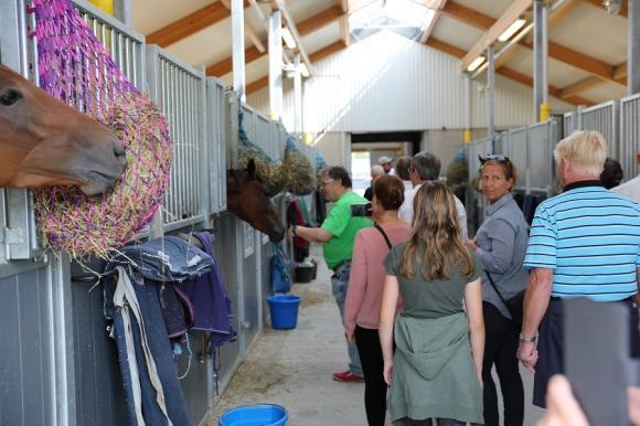 En tur genom Julian McLarens stall. De nyfikna hästarna bjöds på många nosklappar.