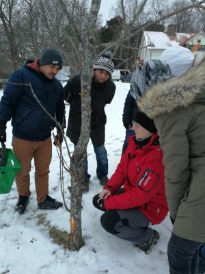 Lena Biärsjö visar kursdeltagarna hur skador i trädets bark kan se ut.