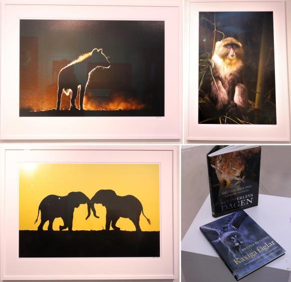 Några av fotografierna från den fina utställningen.