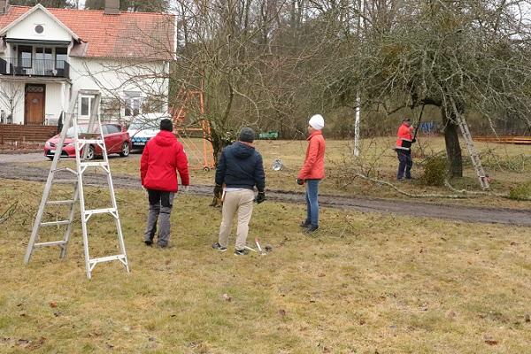 Med några meters avstånd kan man få en helhetssyn på trädet och grenarna innan man kliver närmre...
