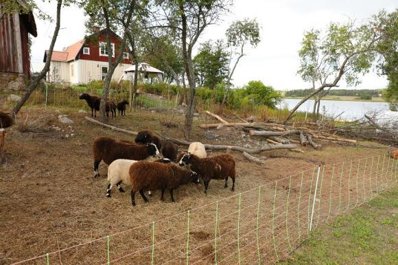 Det krävs knappast någon fantasi för att förstå varför gården heter Uddens Sjögård...