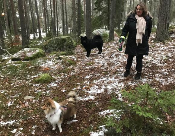 Birgitta Dickson, med hundarna Nessie och Teddy, beundrar den nya hundrastgården.