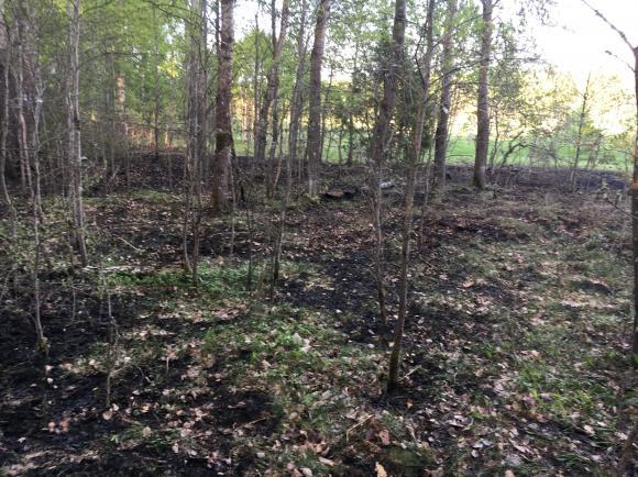 Sedan i måndags har det utbrutit ett mycket stort antal markbränder runt om i Storstockholm (drygt 200 stycken i skrivande stund, men antalet ökar hela tiden). Här i Upplands-Bro har vi också haft ett antal markbränder, bland annat i Gröna Dalen (bilden), i Gamla Bro och på ytterligare några platser.