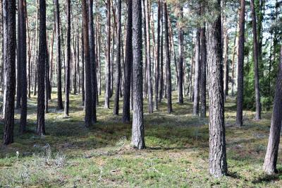 Rösaring är en magisk plats att besöka och en riktig batteriladdarstation för den som tycker om skogspromenader.