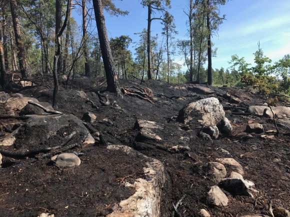 Cirka 1 500m2 hann brinna vid söndagens mark- och skogsbrand vid Kevans stugby i Håbo-Tibble.