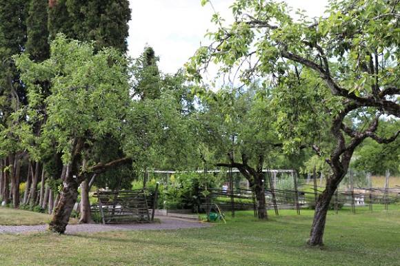 Kryddträdgården är avgränsad av en gärdesgård och omgiven av fruktträd.